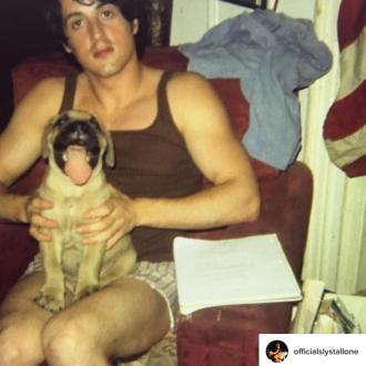 Sylvester Stallone's dog Butkus helped launch his acting career