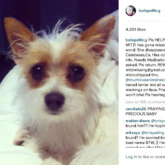 Tori Spelling offers 'reward' for missing dog