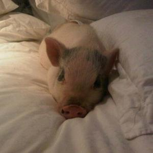 Tori Spelling Gets Pet Pig